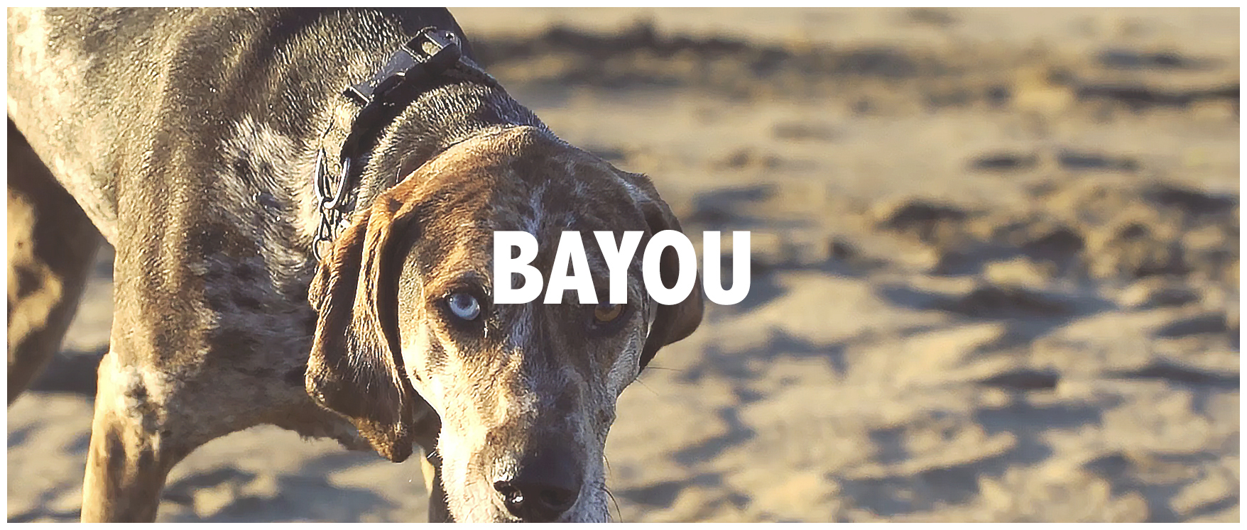 Garlic Media Group's Video Examples - Bayou